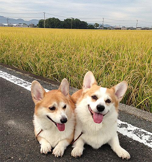 稲と2ショット2