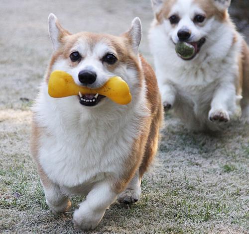 新しい黄色おもちゃ