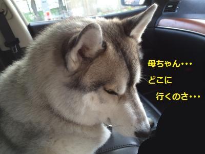 蜀咏悄141_convert_20131206195050