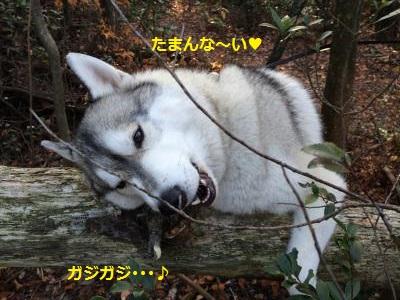 蜀咏悄139_convert_20131205195115