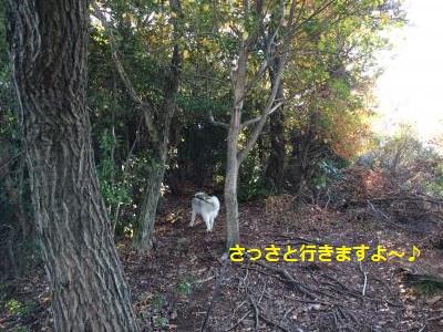 蜀咏悄123_convert_20131211205929