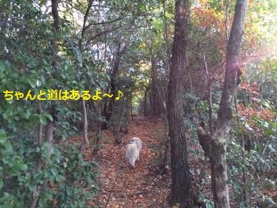 蜀咏悄125_convert_20131214190237