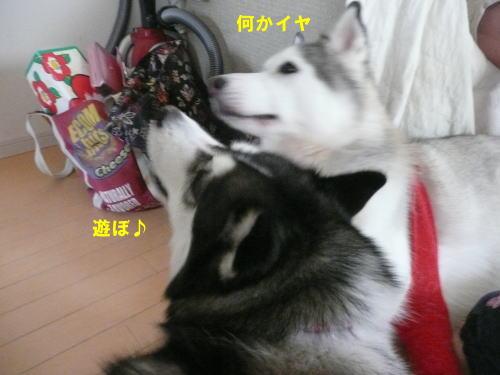 2012060320.jpg