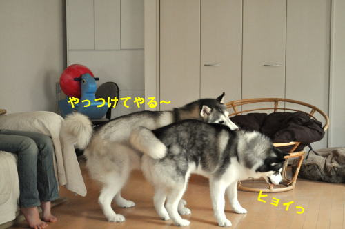 2012061008.jpg