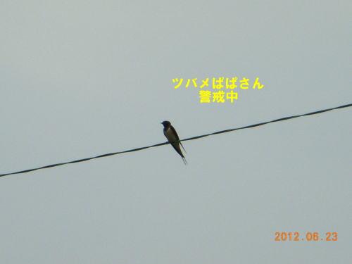 2012062303.jpg