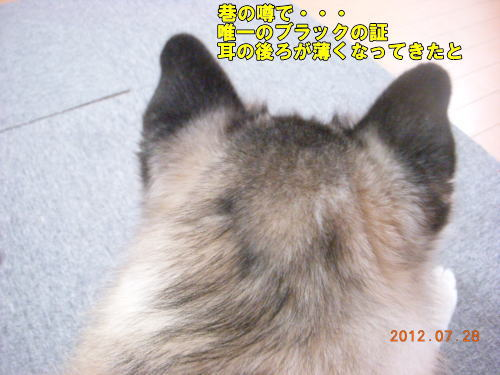 2012072803.jpg