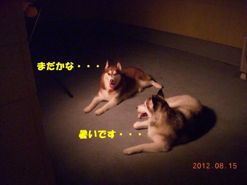 2012081511.jpg