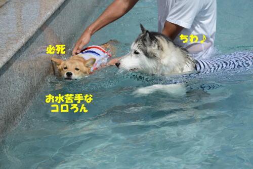 2012090932.jpg