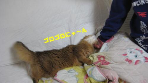 2012121514.jpg