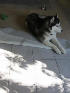 2012 5月21日金環日食 009