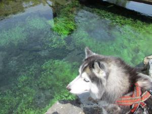 2012 5月山中湖 ワフ 031