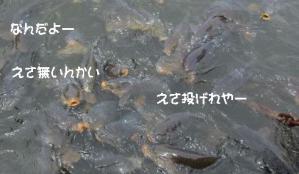 2012 5月山中湖 ワフ 043