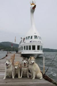 2012 5月山中湖 ワフ 186