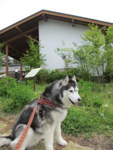 2012 5月山中湖 ワフ 068