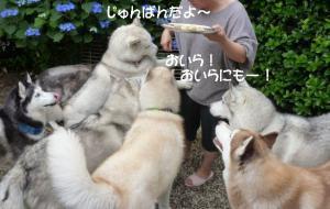 2012 6月ティナ家BBQ 045a