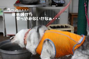 2012 7月菅平合宿 074a