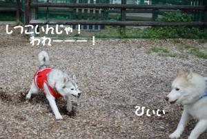 2012 7月菅平合宿 208a