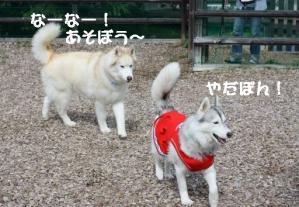 2012 7月菅平合宿 199a