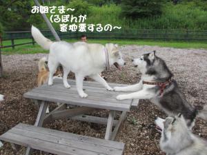 2012 7月菅平合宿 272a