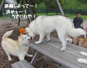 2012 7月菅平合宿 271a