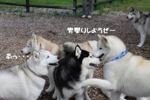 2012 7月菅平合宿 245a
