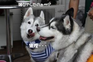 2012 7月菅平合宿 137a