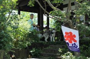 2012 8月鬱花&チビハス 208