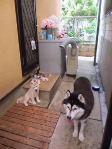 2012 8月鬱花&チビハス 108