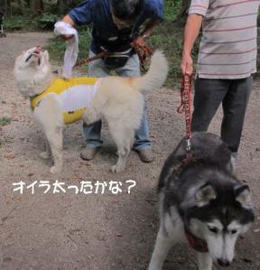 2012 8月鮎料理「渓流荘」 067