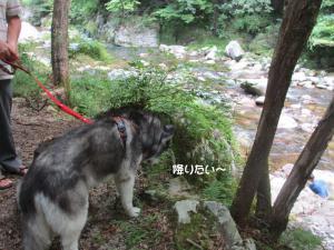 2012 8月鮎料理「渓流荘」 076