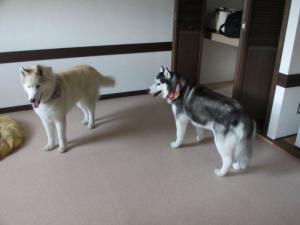 2012 9月諏訪湖・車山高原 057
