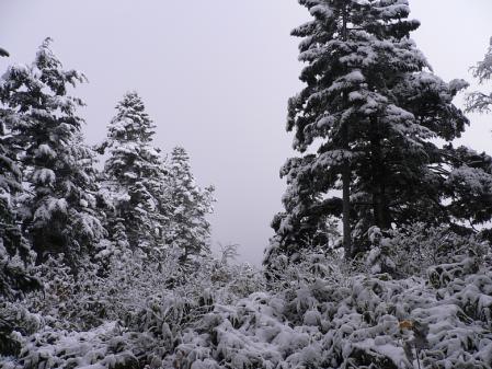 03木に積もった雪