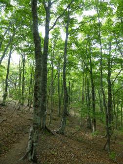 04ブナの森