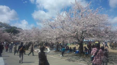 001姫路城桜
