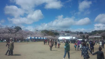 002姫路城桜