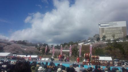 010姫路城桜
