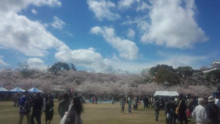 012姫路城桜