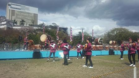 016姫路城桜