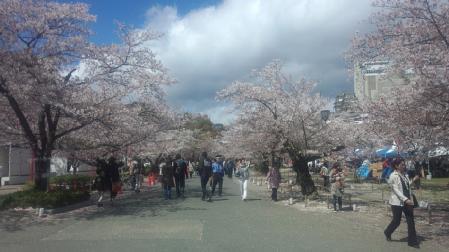 013姫路城桜