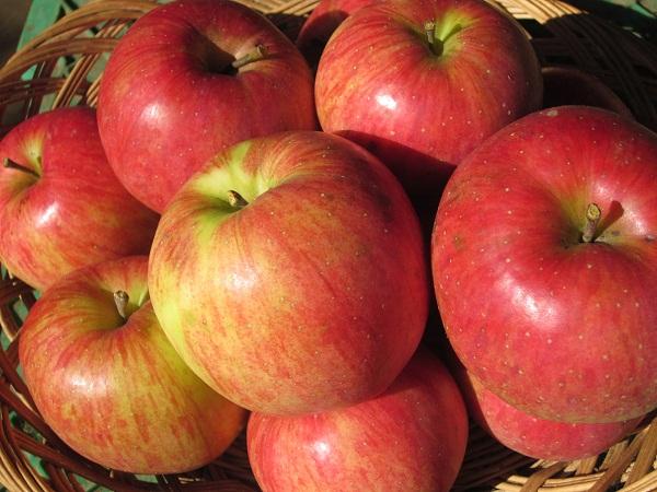 002頂き物のりんご