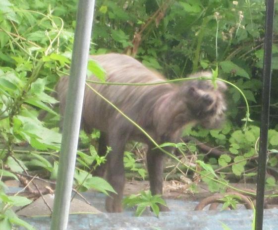 004裏庭の動物2