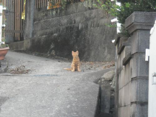 子猫ですね。