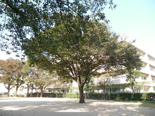いつもの木
