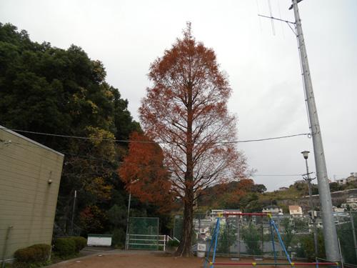 近所の公園の一本杉。