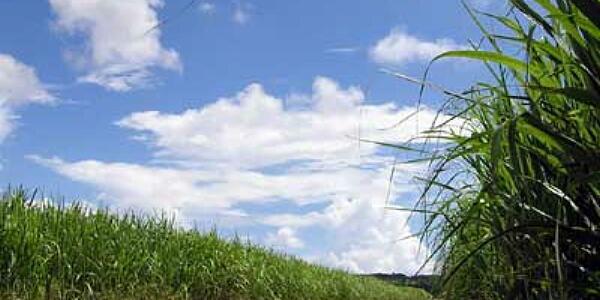バイオ燃料製造しセシウム除染 島根の企業が開発