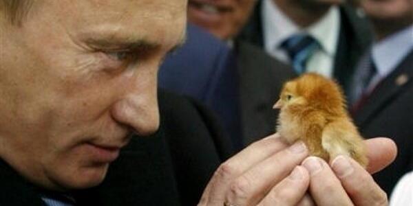 【秋田】プーチン大統領に秋田犬を贈呈すると発表-佐竹知事