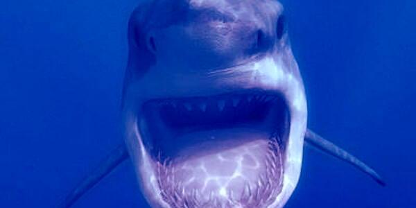 【秋田】「恐ろしくて足が震えた」「海釣りには当分行きたくない」…遊漁船にアオザメが飛び乗り大暴れ、釣り客らが恐怖の体験(動画)