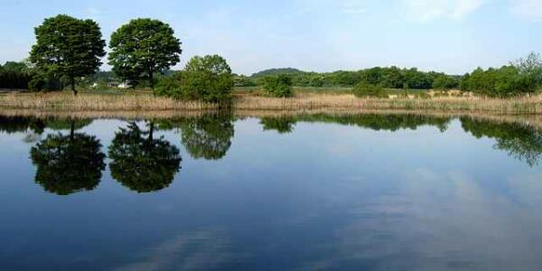 【社会】 20歳と18歳の兄弟が忽然と姿を消し17年、池の底に沈んでいた車から遺体で発見…福岡