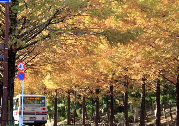 14metasekoia_03.jpg