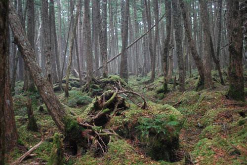 2013-白駒の池の林